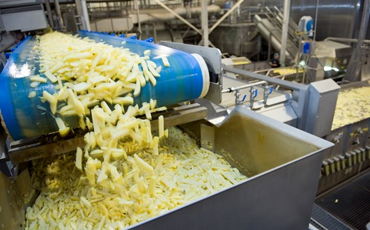 Potatoe varietes right - Fries conveyor